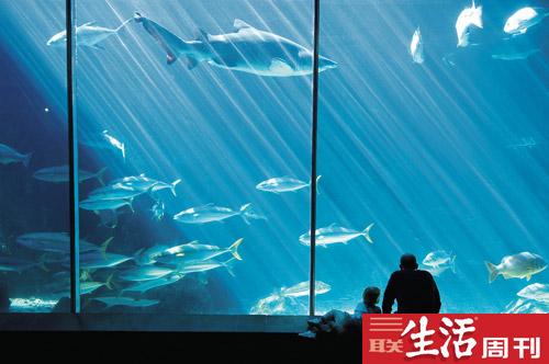 壁纸 海底 海底世界 海洋馆 水族馆 500_332